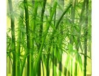 Bamboo P.E.
