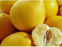 Citrus Grandist P.E.