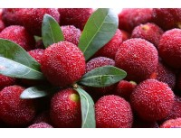 Bayberry Extract